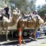 Camels, Bollywood dancing and more at India Day fest