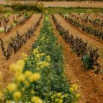 Moët Hennessy Joins For a Living Culture Agro-ecological Transition Movement